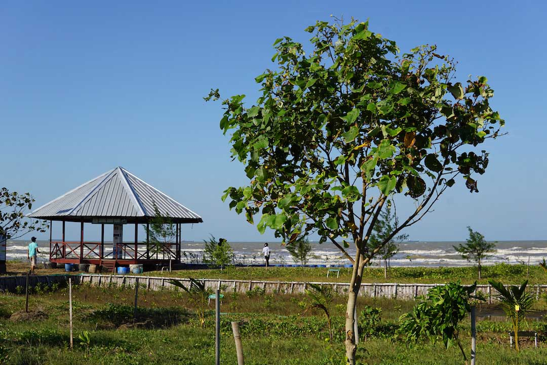 Ternyata Ada Ekowisata Hutan Mangrove di Pantai Karangsong Indramayu