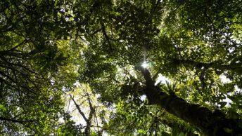 Alasan untuk Adopsi Hutan