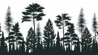 Mengenal Kembali Hutan Indonesia